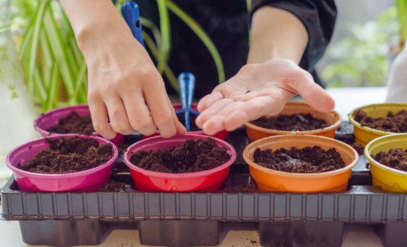 child growing seedlings and plants at home garden in colorful pots, ecology concept, selective focus