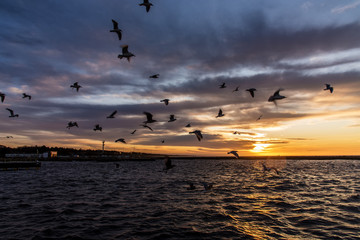 Vögel über Ostsee bei Sonnenuntergang