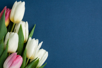 Zelfklevend Fotobehang Tulp five white and pink tulips on left corner of photo on classic blue background, space for text, layout for postcard, woman's day or valentines day, holiday concept