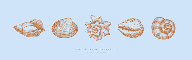Set of hand-drawn realistic seashells. Shells of mollusks of various shapes: coils, spirals, mussels on a blue background. Oceans nature in vintage style. Vector illustration of engraved lines.