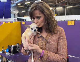 Holly Maxwell, who runs personal shopping business ÒThe Winning LookÓ for dog handlers, kisses a chihuahua named Tiro at the Westminster Kennel Club Dog Show