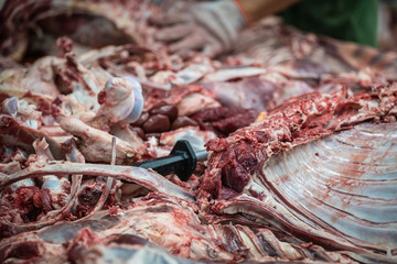 Lamb and cow carcass meat and bones