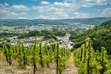 Vineyard in Trittenheim