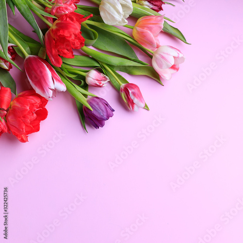 Spring season abstract background. Multicolored tulips frame on pink surface. Mother's day, Women day, seasonal concept. Copy space.