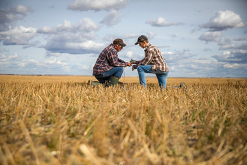 Grandfather and grandson farmers examining wheat crop