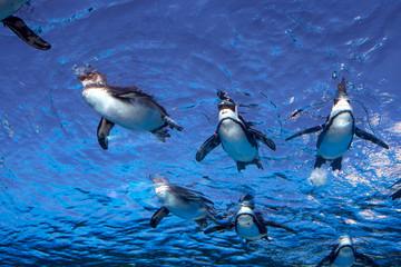 Penguins swimming at Sunshine Aquarium in Tokyo 天空のペンギン サンシャイン水族館