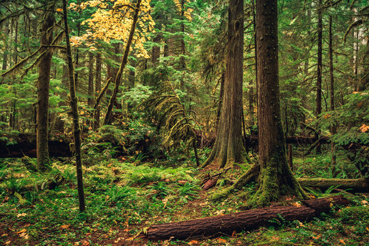 Oregon Forest, Willamette National Forest