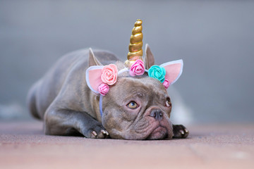 French Buldog dressed up as unicorn wearing a beautiful headband with pastel colored flowers and golden horn, lying flat on ground and looking up with big eyes Fotobehang
