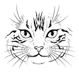 Foto op Canvas Hand getrokken schets van dieren Cat face illustration