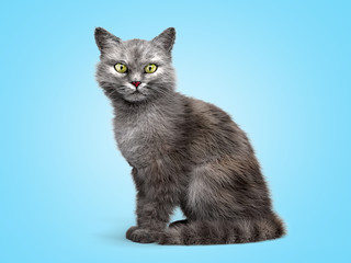 gray cat sits and looks at the camera 3d render on a blue gradient background