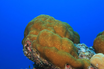 Close up of stony coral