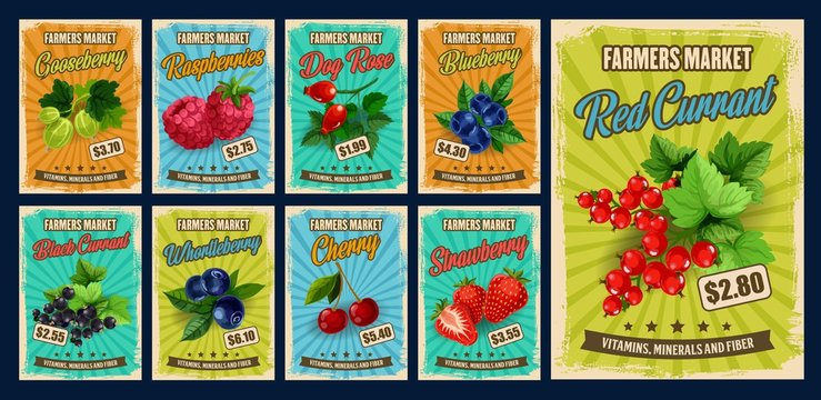 Berry and fruit branches of vector strawberry, cherry and blueberry, raspberry, black and red currants, gooseberry, bilberry and sweet briar. Farmer market retro posters with berries and price tags