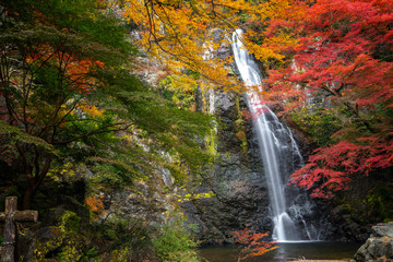 Wall Mural - minoh waterfall park with autumn red and yellow background