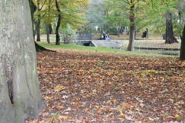 Fototapeta Jesienny pejzaż obraz