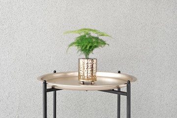 Asparagus plant in metal pot on a brass tray against concrete background. Wall mural