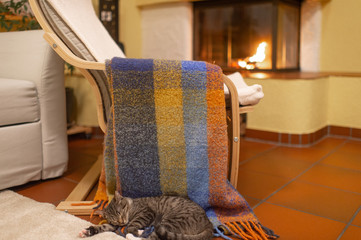 Picture of lovely cat lies on a colourful coverlet