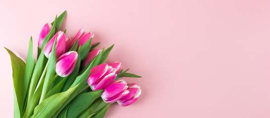 Fotorolgordijn Tulp Pink tulip flower on blue wood table background with copy space for text. Love, International Women day, Mother day and Happy Valentine day concept