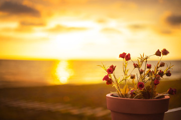 art background sea sunset water ocean reflection bright yellow light mysterious sky clouds photo warm color. Flower pot small tender red flowers. Free Place for inscription poster text. fantasy nature