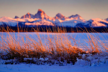 Wild Grass Weeds Sunset Tetons Teton Mountains in Background Beautiful