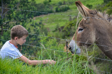 face to face boy and donkey / mule behind a fence in Colombia