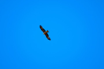 Eagle during flight in sky