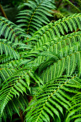 fern in the forest photo wallpaper