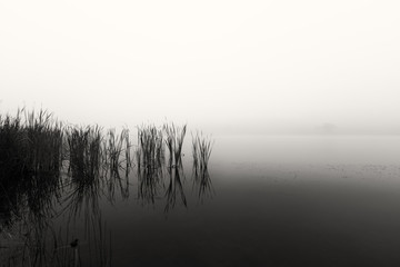 Landscape of a dam with reeds in still water on a foggy morning