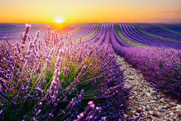 Foto auf AluDibond Kultur Blooming lavender field at sunset in Provence, France