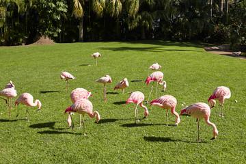 Garden Poster Flamingo Pink flamingos on a sunny summer day.