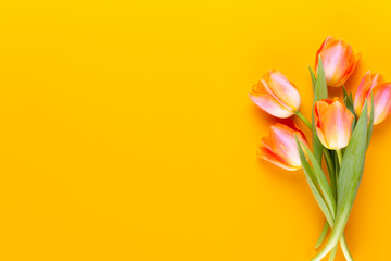 Foto op Canvas Tulp Yellow pastels color tulips on yellow background.