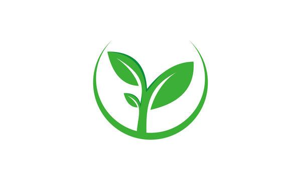 vector green leaf logo