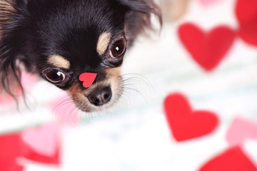 Close-up picture of the heart on the dog's nose