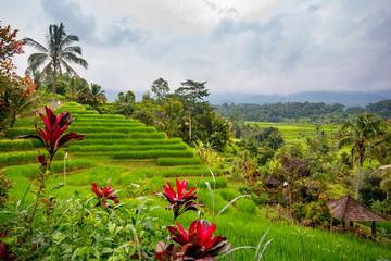 Rice fields in Jatiluwih, Bali, Indonesia