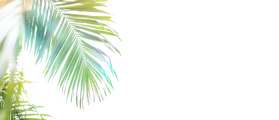 Palm leaf on white background.Palm sunday and easter day concept.Palm sunday for welcome Jesus King of King to Jerusalem before Easter day.isolated on white background. Wall mural