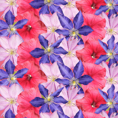 Fototapete - Beautiful floral background of petunia and clematis. Isolated