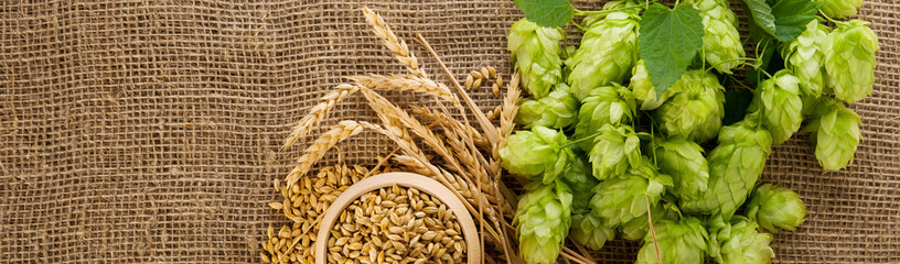 Brewing ingredients. Barley raw grain in wooden bowl, wheat ears and hops green cones on burlap background with copy space, wide panorama format for banner or frame.