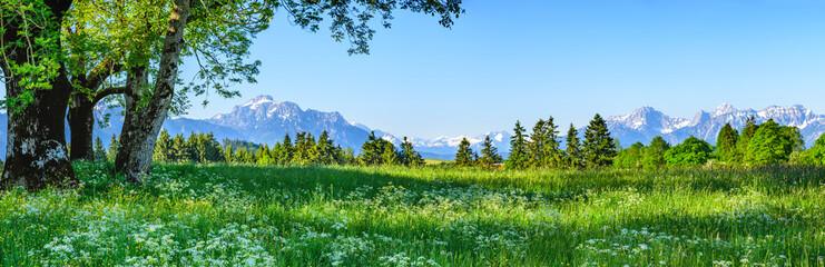 Foto auf Leinwand Himmelblau Herrliche Natur am ostallgäuer Alpenrand im Frühling