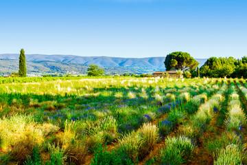 Landschaft bei Ville sur Auzon in der Provence
