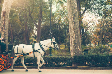 Horse pulling a carriage walking in the park