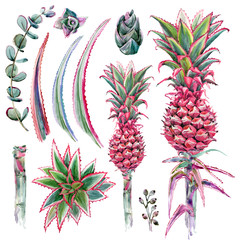 pink pineapple plant set isolate on whitebackground. Hand drawn watercolor illustration.