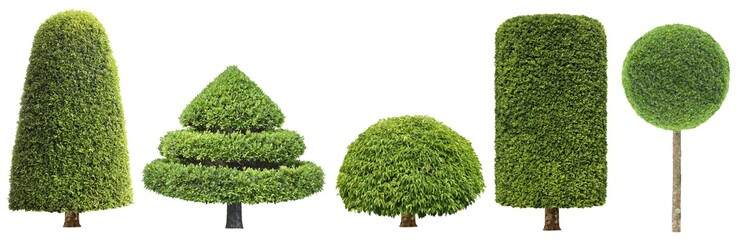 collection set of different shape of topiary tree isolated on white background for formal Japanese and English style artistic design garden with clipping path