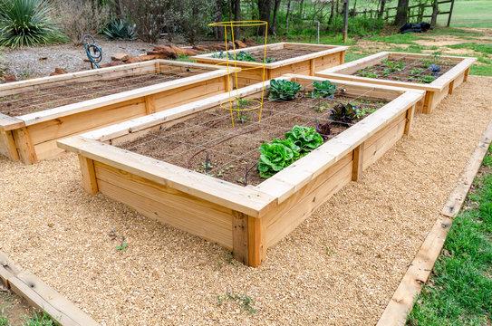 DIY raised fresh vegetable garden irrigated and divided