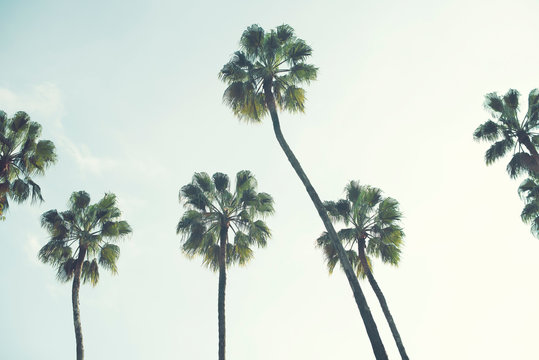 Palm trees over a blue sky minimal backlight