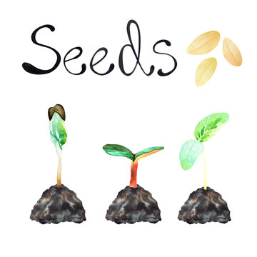 Watercolor set with sprouts sprouted from the earth against a white background. The inscription seeds, sprouted seedlings, young greens, seeds on a white background.