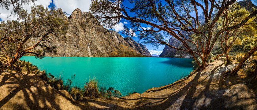 Quenoal trees in the Llanganuco lake, in the white range near Huascaran mountain, in Yungay, Huaraz, Ancash, Peru.