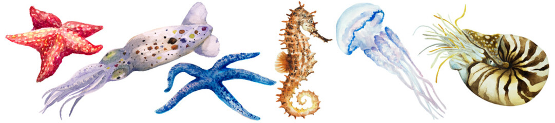 Set of squid, colorful starfish, jellyfish, nautilus mollusk (Nautilus pompillius) and seahorse on a white background, hand drawn watercolor.