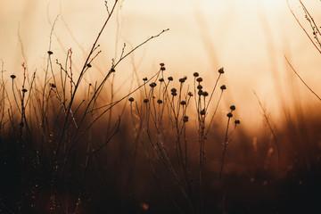 Photo sur Plexiglas Mer coucher du soleil dry orange grass at sunset