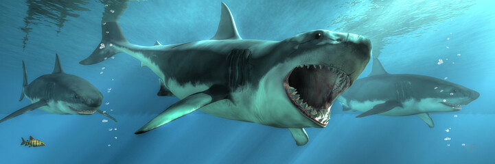 Three great white sharks swim towards you out of the depths.  One of them decides to take a bite out of you and attacks. 3D rendering