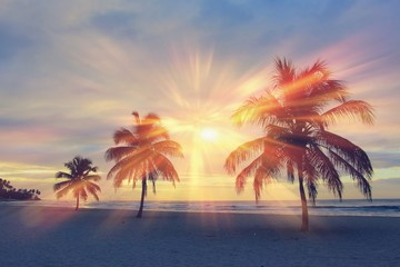 Printed roller blinds Roe Colorful sunrise and huge palm trees on the beach in the Dominican Republic
