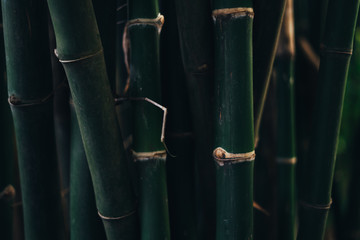 A green bamboo forest close up